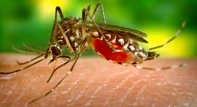 Town focuses on early-season mosquito measures