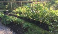 The joyful Zen of a well-tended, bountiful garden