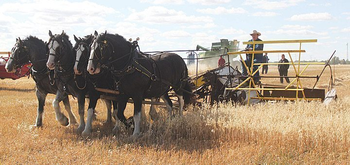 Historical harvest event met with sunshine and success