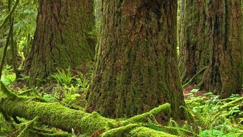 Stick to the facts to protect old-growth forests in B.C.