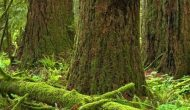 Safeguarding public confidence in B.C.'s forest management