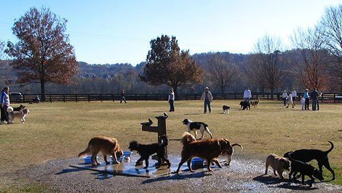 Discovering the wonder of the off-leash park