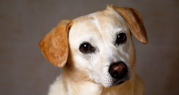 Changes coming to Kindersley animal control bylaw