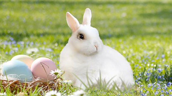 Not just a fluffy tale about the Easter Bunny