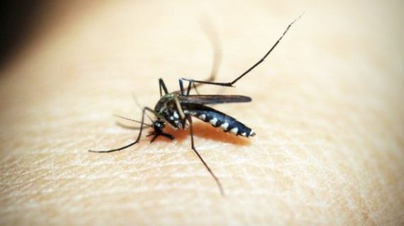 Town focusing on mosquitoes early in season