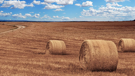 Realized net income for Canadian farmers declines