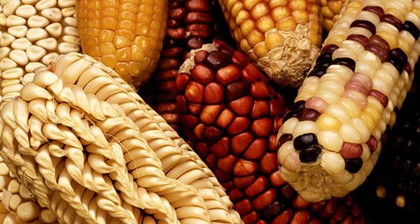 Planting the seeds for broader understanding of food's origins