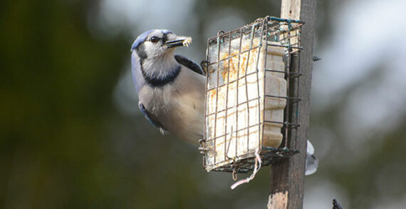Get those bird feeders up and enjoy the show