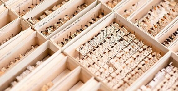 Study hopes to find ways to contain spread of mountain pine beetles